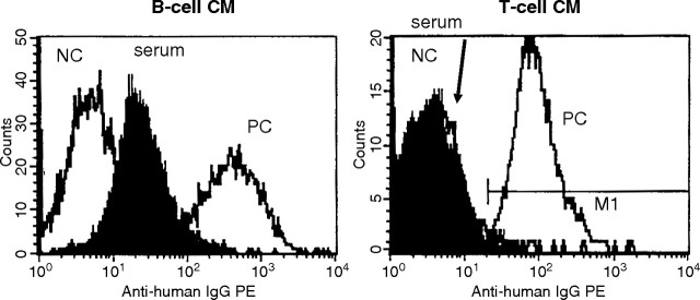 FACS crossmatch of B cells and T cells as shown by their histograms. The FACS crossmatch of T cells is unequivocally negative, whereas the B cells provide a histogram of weakly increased intensity. Due to the faint intensity it does not lead to an interpretable result especially in the context of a negative <t>HLA</t> class II-specific B-Screen <t>ELISA</t> and a negative conventional CDC crossmatch performed with isolated B cells.