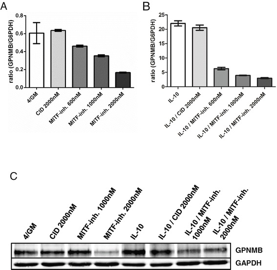 MITF-Inhibition decreases GPNMB gene expression in moDC. moDC were generated in vitro with GM-CSF, IL-4 and DMSO alone (4/GM) with or without IL-10 and additional MITF inhibitor ML329 (MITF-inh.; 600 nM - 2000 nM) or KLF5 expression inhibitor CID (2000 nM) as control and analyzed for GPNMB expression. (A, B) qRT-PCR analysis: relative level of GPNMB mRNA. The mean (±SD) of duplicate measurements is shown. (C) GPNMB protein levels were analyzed by western blotting. GAPDH served as loading control. Exemplary results from at least three independent experiments using different donors are presented.