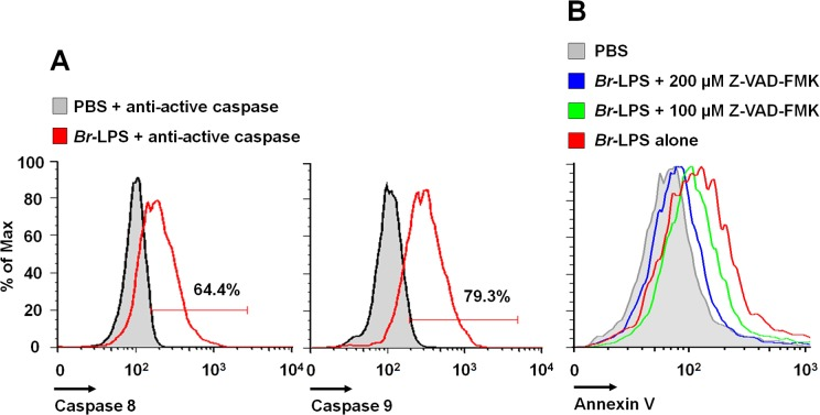 Br- LPS induces activation of caspase 8 and 9 in PMNs. (A) Heparinized blood was incubated with 0.3 pmol/mL of Br- LPS or PBS for 30 minutes and stained with anti-active caspase 8 or anti-active caspase 9. PMNs population was analyzed by each caspase marker (B) Heparinized blood samples were treated with Z-VAD-FMK or PBS for 1 hour and then incubated with Br -LPS (1.5 pmol/mL) for 2 hours. PMNs population was analyzed by Annexin V. Geometric means of histograms are displayed as relative units. Experiments were repeated at least three times.