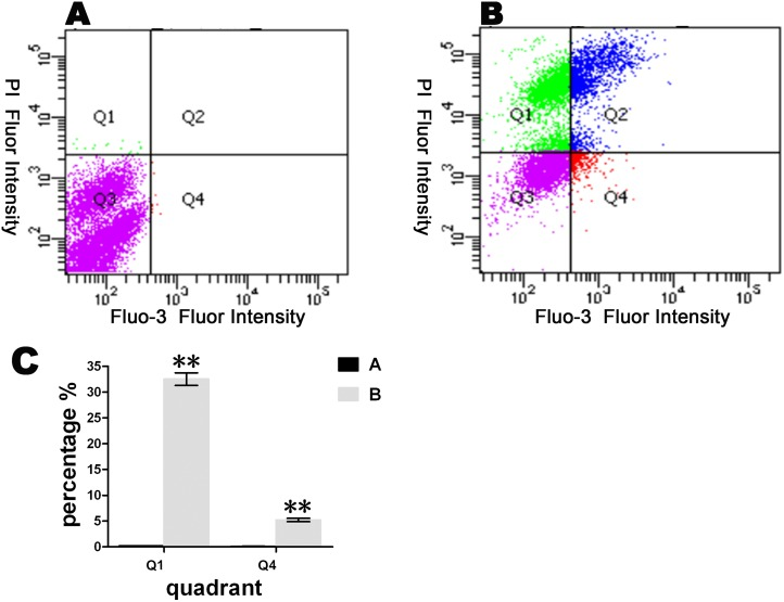 The effects of the 2B protein on the Ca 2+ content and membrane integrity in host cells. Untreated BHK-21 cells (A) and cells transfected with pXJ-2B-HA (B) were stained with Fluo-3 AM and propidium iodide (PI) at 12 hours post-transfection. The increase in intracellular Ca 2+ (Fluo-3 AM) is shown in Q4. This increase was associated with a change in the PI in BHK-21 cells. A histogram was constructed to reveal the changes in the intracellular Ca 2+ concentration (C). Asterisks indicate significant differences between the indicated samples (*P