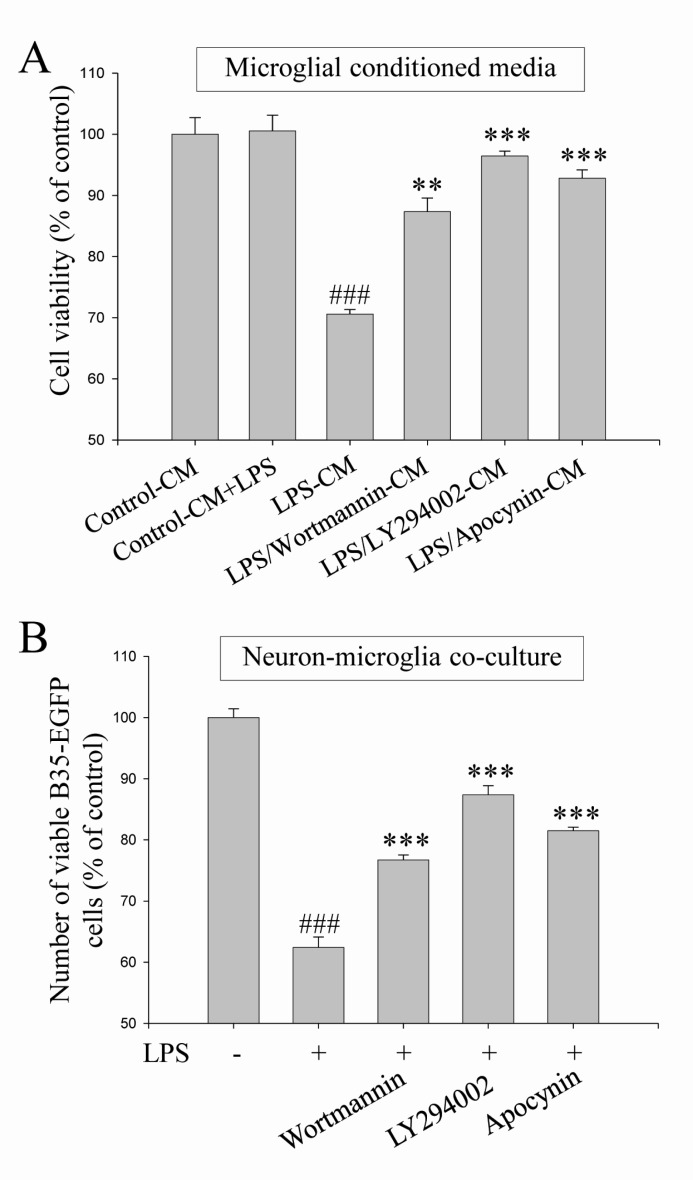 Neuroprotective effects of the blockade of PI3K/Akt and NADPH oxidase against microglia-mediated neuronal cell death. Neuroprotective effects of the blockade of PI3K/Akt and NADPH oxidase were investigated against microglia-mediated neuronal cell death in microglial conditioned media system (A) and in neuronmicroglia co-culture system (B). Wortmannin (100 nM), LY294002 (25 µM) and apocynin (500 µM) were pretreated in both experimental systems and then, neuronal cell deaths were evaluated as shown in Fig. 2 (See 'Materials and methods' for the detailed description). Values are the mean±S.E.M. of four samples in one independent experiment. The data were replicated in three repeated independent experiments. ### p