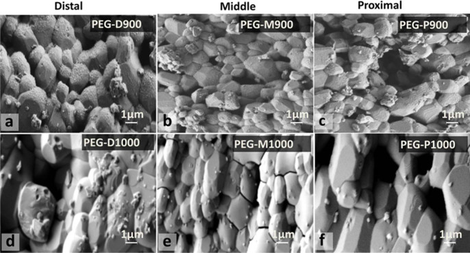 Surface morphology of PEG-treated BA scaffolds (a – PEG-D900, b – PEG-M900, c – PEG-P900, d – PEG-D1000, e – PEG-M1000, and f – PEG-P1000) after degradation test for day-7 at 37°C in PBS. Presence of PEG in a–c compared to d–f, but size of deposited particles is large in d–f compared to a–c. PEG impregnated sintered bovine scaffolds on Days 1, 4, and 7.