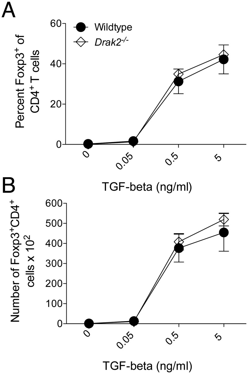 TGF-β-mediated regulatory T cell induction is not altered in the absence of Drak2 . A) CD4 + CD25 - CD44 lo naïve cells were purified from wildtype and Drak2-/- mice and stimulated with 1μg/ml anti-CD3 and 1μg/ml anti-CD28 with 20ng/ml IL-2 alone or plus 10-fold TGF-β titrations for 3 days. The A) percent and B) number of Foxp3 + cells of electronically gated CD4 + cells is shown. There was no significant difference in the response of the wildtype and Drak2-/- cells according to the Mann-Whitney U -test.
