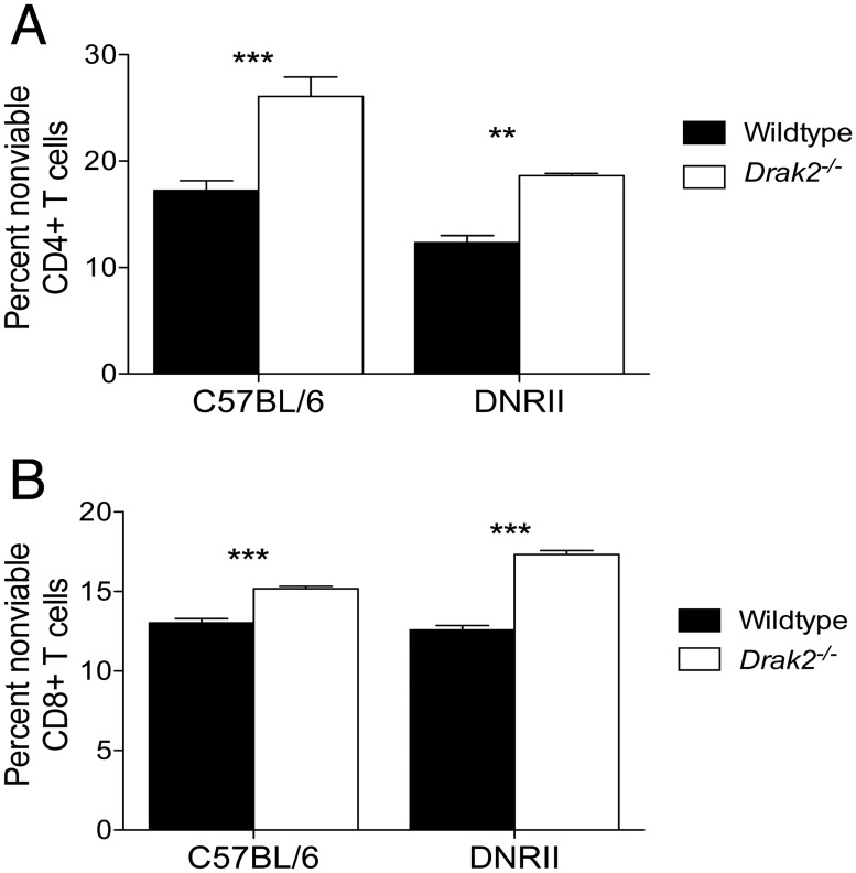 Enhanced susceptibility to death of Drak2-/- T cells compared to wildtype T cells is independent of TGF-β signaling in vitro . A) CD4 + CD25 - CD44 lo or B) CD8 + CD25 - CD44 lo naïve cells were purified from wildtype, Drak2-/- , DNRII , and DNRII . Drak2-/- mice and stimulated with anti-CD3 and anti-CD28 for 2–3 days. The percent of nonviable CD4 + or CD8 + T cells is shown. Cells were obtained from one mouse per group and tested in quadruplicate. Data are representative of four separate experiments. **P