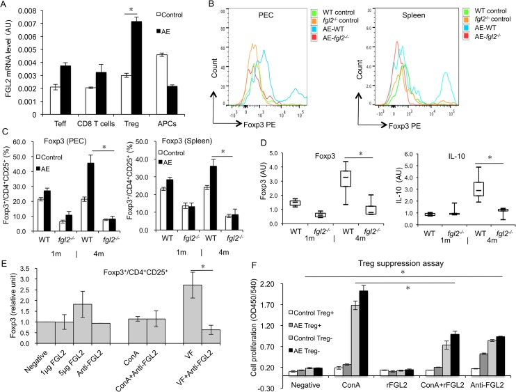 Treg secretion and function in both AE-WT and AE- fgl2 -/- mice after E . multilocularis infection, and in WT mice in response to recombinant FGL2/anti-FGL2-MAb blockade. (A) Spleen was taken from non-infected WT and AE-WT mice, CD4 + Teffs, CD8 + T cells, CD4 + CD25 + Tregs and APCs were isolated by FACS cell sorting, fgl2 mRNA levels were determined by qRT-PCR. (B) Representative images of Foxp3 mean fluorescence intensity (MFI) from AE-WT and AE- fgl2 -/- mice, and non-infected mice as controls. (C) Frequency of Foxp3 + T cells within CD4 + CD25 + T cells in PECs and spleen cells from AE-WT and AE- fgl2 -/- mice at 1 month and 4 months post-infection. (D) Foxp3 and IL-10 gene expression in PECs during E . multilocularis infection (measured by qRT-PCR). AU: arbitrary units. Graphs show the mean±SD. Data represent mean±SD of three independent experiments of a total 15–18 mice in each group (5–6 mice per group in each independent experiment). Comparison between groups was performed using a one-way ANOVA for statistical analysis. (E) 0, 1, and 5 μg/mL of recombinant FGL2 and 1μg/mL of anti-FGL2-MAb were added to primary spleen cells from non-infected WT mice, or spleen cells stimulated with ConA or vesicle fluid (VF). Relative expression levels of Foxp3 + /CD4 + CD25 + were determined by flow cytometry. (F) CD4 + CD25 + Tregs (suppressor cells) and CD4 + CD25 - Teff cells (responder cells) were isolated from spleen cells of both non-infected and infected AE-WT mice by FACS. The two cell populations were co-cultured at a ratio of 1:1 (suppressor: responder) in the presence of APCs and ConA (2 μg/mL), rFGL2 (1 μg/mL), ConA (2 μg/mL) + rFGL2 (1 μg/mL), or anti-FGL2-MAb (1 μg/mL); cell proliferation was measured using BrdU ELISA. Data represent mean±SD of three independent experiments of a total of 15–18 mice in each group (5–6 mice per group in each independent experiment). Expression of Foxp3 + /CD4+CD25 + was normalized with negative control (cells without rFGL2 and a