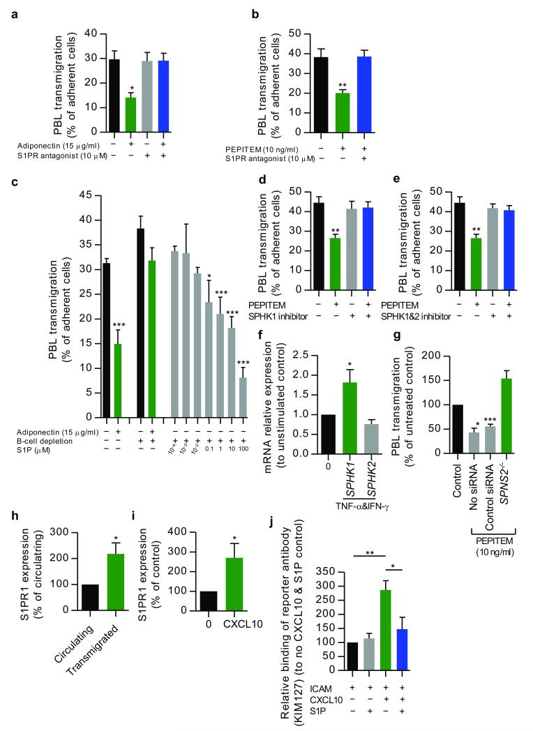 PEPITEM induces the S1P release from endothelial cells which inhibits T cell migration ( a, b ) The effects of an S1PR antagonist (10 μM) on T cell migration in the presence or absence of ( a ) adiponectin (n=3–5) or ( b ) PEPITEM (n=3–7). ( c ) The effects on T cell transmigration of adding S1P to B cell depleted PBL n=3–6. ( d, e ) The effects of ( d ) SPHK1 specific inhibitor (5 μM) or ( e ) SPHK1/2 inhibitor (5 μM) on T cell transmigration in the presence of PEPITEM, n=3. ( f ) The expression of SPHK1 and SPHK2 mRNA in endothelial cells, n=7–8. ( g ) The effect of SPNS2 specific siRNA on T cell transmigration in the presence of PEPITEM, n=4. ( h, i ) The expression of S1PR1 on memory T cells (CD3 + CD45RO + ) on ( h ) stimulated endothelial cells (n=3) and ( i ) on plated ICAM-1 stimulated with CXCL10 (n=6). ( j ) The effects of S1P on the expression of the LFA-1 activation epitope (KIM127) on ICAM-1 adherent memory T cells (CD3 + CD45RO + ) stimulated with CXCL10, n=4. Data are mean±s.e.m and ( g - j ) normalized to control. * P ≤0.05, ** P ≤0.01, *** P ≤0.001 compared to untreated control by ANOVA and ( a-g ) Dunnett compared to ( a-b, d-e, g ) untreated control or ( c ) B cell depletion no adiponectin control or to ( f ) unstimulated (0) control or ( j ) Bonferroni post-test or ( h ) paired t-test on raw data or ( i ) Wilcoxon signed rank test.