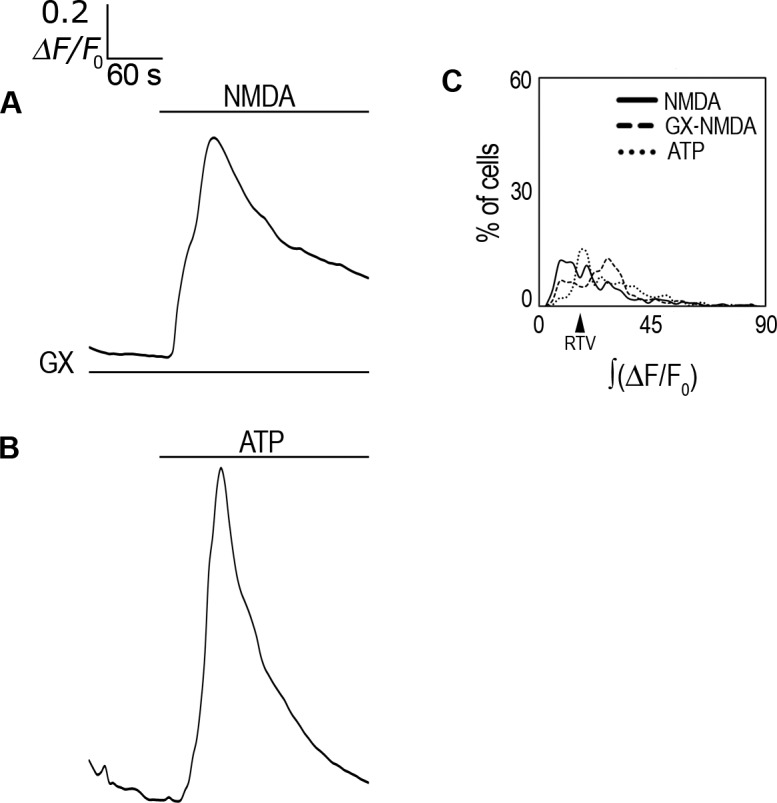 Genistein effect on i Ca 2+ response to NMDA and ATP response. ( A ) ΔF/F 0 averaged response in Fluo-4-AM-labeled rCCA perfused with 1 mM NMDA in the presence of genistein (GX). ( B ) ΔF/F 0 averaged response in Fluo-4-AM-labeled rCCA perfused with ATP. Line above traces indicates perfusion with 1 mM NMDA after 120 sec basal recording. Line below (if applicable) indicates the inhibitor used throughout the recording time. ( C ) ∫(ΔF/F 0 ) distribution histogram for cell population responses in genistein and ATP conditions; the NMDA treated population distribution is included for comparison. The RTV value is indicated by the black arrowhead (see text). Statistical analysis for these distributions with the number of cells and the number of experiments are shown in Table 1 . Representative images from i Ca 2+ responses are shown in S8 Fig .