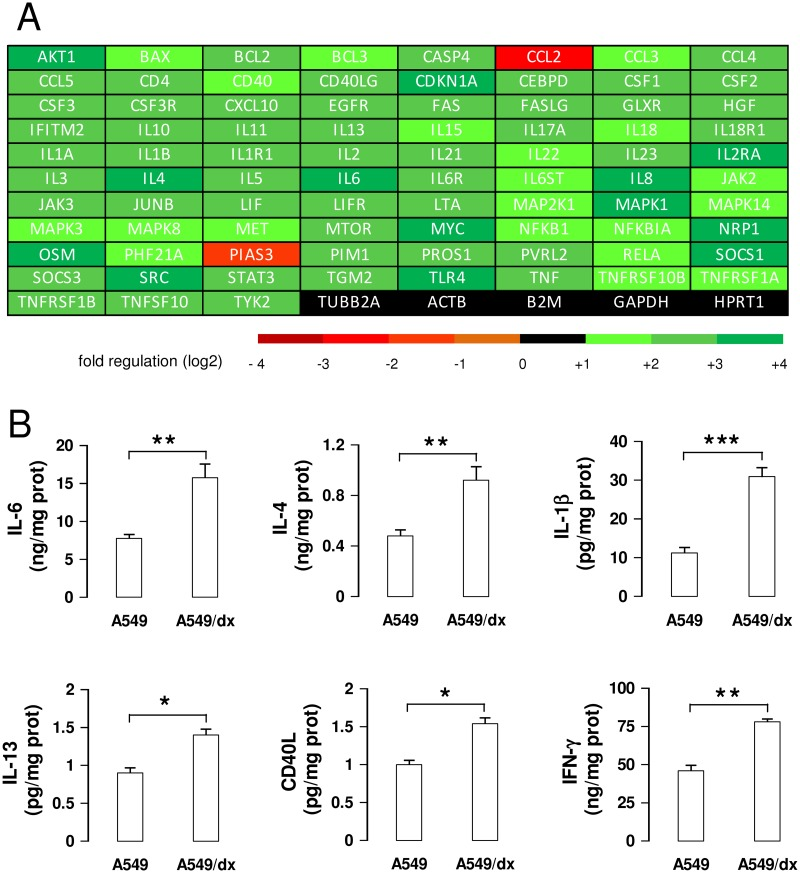 Multidrug resistant cells have a higher activity of IL-6/STAT3 signaling than chemosensitive cells. A. The cDNA from A549 and A549/dx cells was analyzed by a PCR array specific for IL-6/STAT3 signaling, as reported under Materials and methods. The fold regulation of the 83 genes analyzed, expressed in logarithmic scale, was represented in a colorimetric scale. The figure is the mean of 4 experiments. B. The levels of IL-6, IL-4, IL-1β, IL-13, CD40L, IFN-γ were measured in the cell culture supernatants by specific ELISAs. Data are presented as means ± SD (n = 3). * p