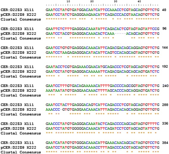 Sequence alignment of CER:D22Z3 and pCER:D22Z8 repeats. Sequences flanking K222 were analyzed. The new sequence repeat we called pCER:D22Z8 shows 71.8% similarity to CER:D22Z3. The repeat pCER:D22Z8 is a centromeric repeat (CER), which we have named pCER according to its likely position in the pericentromere (see the text). The organization of pCER:D22Z8 consists of eight repeats of 48 bp each. According to the chromosomal location of K222, pCER:D22Z8 is located in chromosome 22 and eight additional chromosomes.
