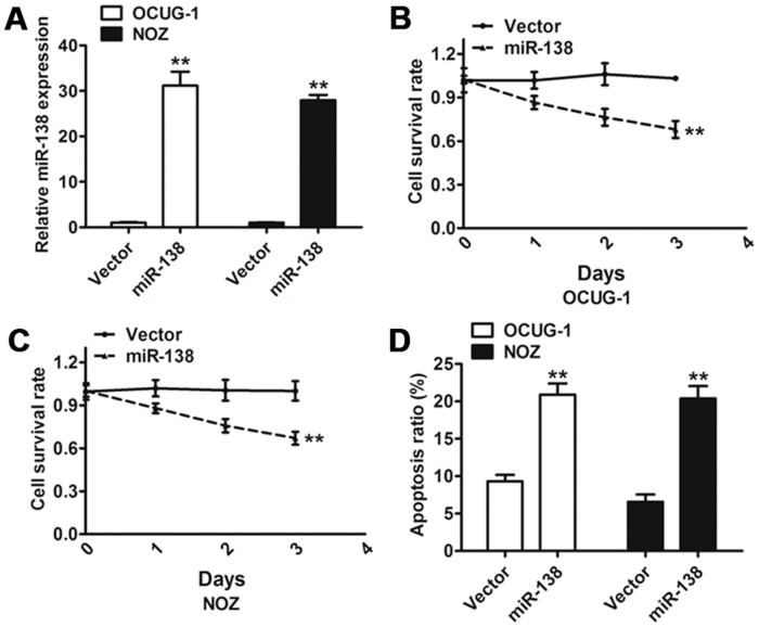 Effect of miR-138 on gallbladder carcinoma cell proliferation and apoptosis. (A) The qRT-PCR analysis confirmed that the expression of miR-138 was clearly increased in cells transduced with miR-138 compared with the control vector. (B and C) Effect of miR-138 on cell proliferation was measured using MTT assay in OCUG-1 and NOZ cells transduced with miR-138 or the control vector. (D) Flow cytometric analysis of the effect of miR-138 on apoptosis of OCUG-1 and NOZ cells. Error bars represented the SD from three independent trials. ** P
