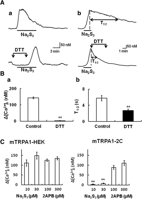 Involvement of the N-terminal cysteine residues of mouse TRPA1 in its activation by polysulfide. (A) The Na 2 S 3 (10 μM)-induced [Ca 2+ ] i increase was inhibited by <t>dithiothreitol</t> (DTT) (a) 2 min before and during 4 min application of Na 2 S 3 , (b) after 4 min in HEK 293 cells expressing mouse TRPA1 (mTRPA1-HEK). The upper panels show [Ca 2+ ] i responses to Na 2 S 3 without DTT, and the lower ones those in the presence of DTT. (B) Summarized effects of DTT. (a) Open and filled columns show the increases of [Ca 2+ ] i responses to Na 2 S 3 in the absence (Control) and presence of DTT, respectively. (b) Times required for half-decline of [Ca 2+ ] i responses to Na 2 S 3 (T 1/2 ) in the absence (Control) and presence of DTT. T 1/2 was calculated by subtracting the value of the time when the Na 2 S 3 -induced [Ca 2+ ] i increase was reduced by half from that when Na 2 S 3 -induced [Ca 2+ ] i increase peaked. Columns with vertical lines show mean ± SEM (a; n = 23–32, b; n = 55–63, from three different transfections). **P