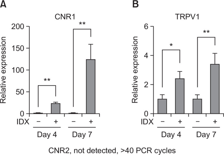 Transcriptional expression profile of CNR1, CNR2 and TRPV1 during adipogenesis in hBM-MSCs. Adipocyte differentiation was induced in hBM-MSCs by exchanging culture media supplemented with 1 μg/ml insulin, 0.1 μM dexamethasone and 0.5 mM isobutylmethylxanthine (IDX). At the seventh day after the induction of adipogenesis, total RNA was extracted and Q-RT-PCR analysis was performed for (A) CNR1 and (B) TRPV1. Values represent the mean expression ± SE of the mRNA of the various genes relative to human GAPDH expression (n=3), * p ≤0.05, ** p ≤0.01.