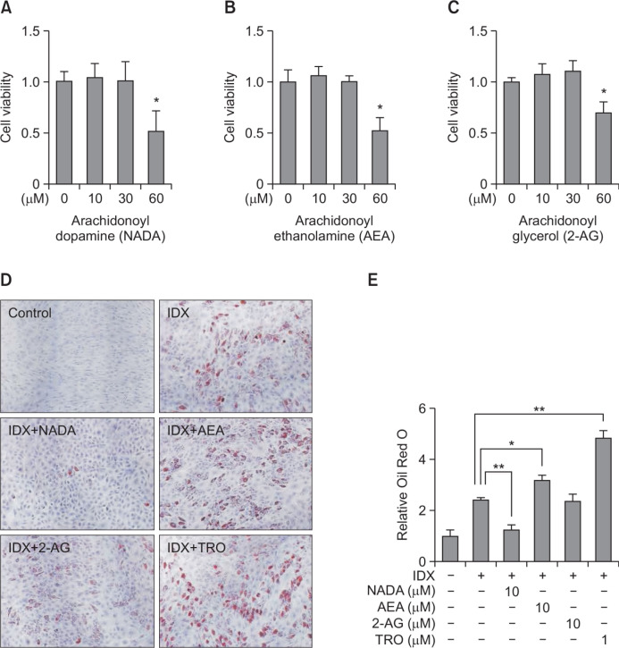 Effects of endocannabinoids on adipogenesis in <t>hBM-MSCs.</t> hBM-MSCs were cultured in 24 well plates. When confluent, the cell viability effects of endocannabinoids were evaluated in hBM-MSCs. NADA (A), AEA (B) and 2-AG (C), were treated for 72 hours in hBM-MSC culture. The cell viability was determined with a detecting reagent, 10 μM of WST-1. Adipogenesis was induced in hBM-MSCs under the presence of the IDX adipocyte differentiation inducing medium. After treating NADA, AEA and 2-AG, in every two or three day, media were exchanged. At the 7 th days in culture, lipid droplets in differentiated adipocytes were stained with Oil Red O (ORO) (D). After dissolving the ORO in isopropyl alcohol, the level of staining was quantified at 500 nm using a spectrometer. Data were normalized by setting the control as 1 (E). Results are the mean ± standard deviation (SD) of three measurements using independent hBM-MSCs from three different donors (n=3). * p ≤0.05 and ** p ≤0.01.