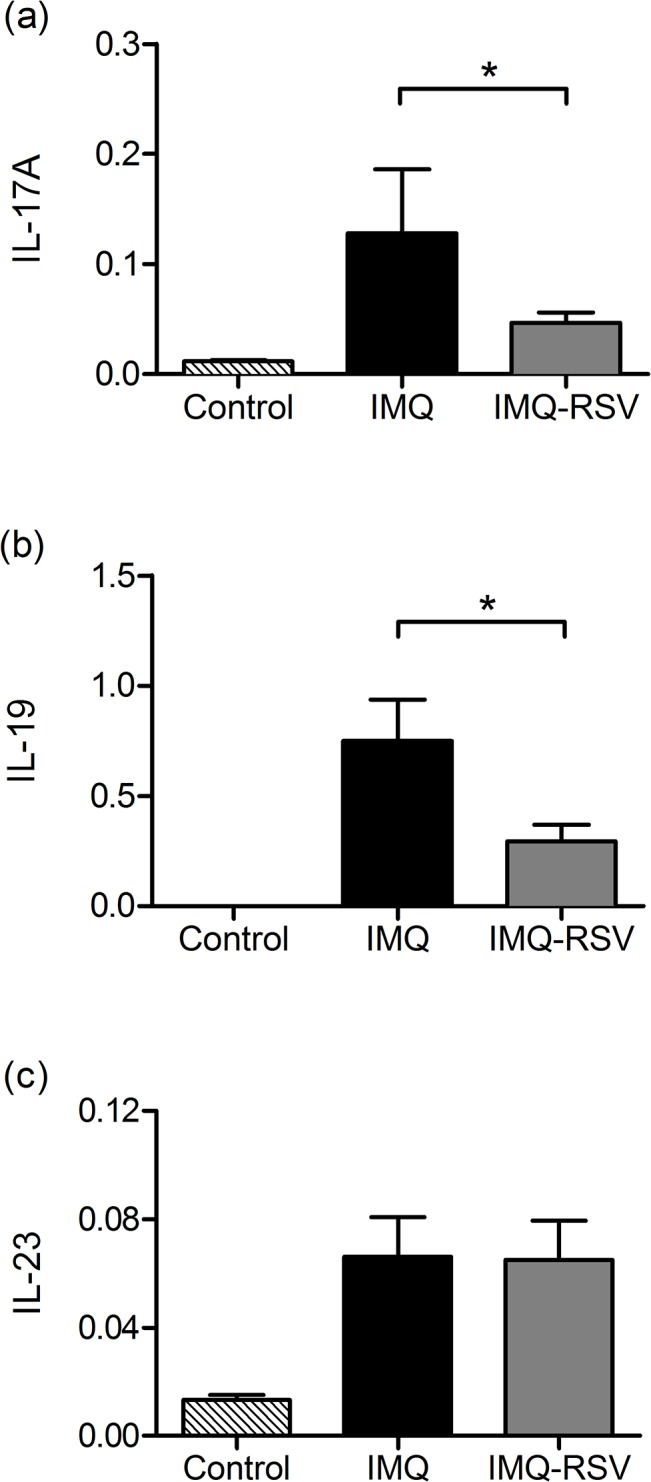 RSV effects on IL-17A, IL-19 and IL-23p19 gene expression. Quantitative PCR of IL-17A, IL-19 and IL-23p19 gene expression was determined to quantify effects of RSV on IL-17A, IL-19 and IL-23p19 gene expression. The mRNA levels of IL-17A, IL-19 and IL-23p19 were quantified using MYO18B as reference gene. Clamped bar with * above indicates the pair of column means are significantly different (p