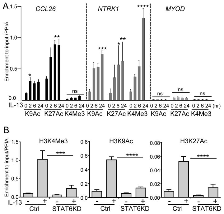 Effect of IL-13 stimulation and STAT6 silencing on epigenetic status of NTRK1 In A , levels of H3K9Ac, H3K27Ac, and H3K4me3 in the promoters of CCL26 , NTRK1 , and MYOD after IL-13 stimulation were quantified by ChIP-RT-PCR. Data from 3 independent experiments calculated as percentage of signal in input DNA normalized to the level of signal in PPIA gene are presented as mean values with standard error measurements. In B , levels of histone modification in the NTRK1 promoter following induction with IL-13 for 24 hr were quantified by RT-PCR in control (Ctrl) and TE-7 cells where the STAT6 gene was silenced by shRNA (STAT6KD). Combined data for 2 independent experiments are shown. *p
