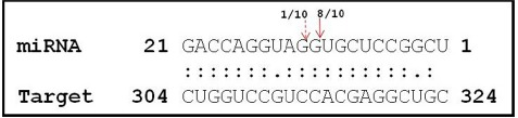Cleavage site mapping of Osa-miR820 target DNA cytosine-5-methyltransferase (OsDRM2). The 5′ end of the cleaved product determined by 5′ RACE followed by cloning and sequencing. The cleavage site is indicated by an arrow in the miRNA:mRNA base-pairing diagram. The numbers indicate the clones in which the cleavage site was mapped, among the total clones analyzed.