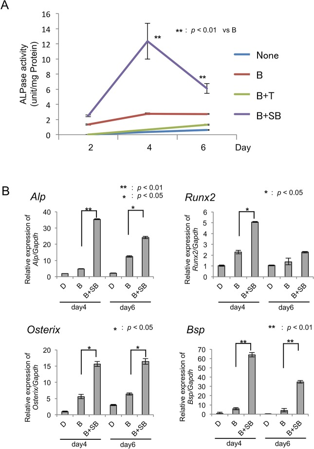 SB431542 treatment on ALP activity and expression of osteoblastic differentiation-related genes in MPDL22 cells. (A) MPDL22 cells were cultured in mineralization-inducing medium in the presence or absence of BMP-2 (50 ng/mL), TGF-β (4 ng/mL) and SB431542 (10 μM). MPDL22 cells were harvested at the indicated time points. ALPase activity was determined as described in the methods section. Activity in U/mg protein for the cell lysates is shown. **: p