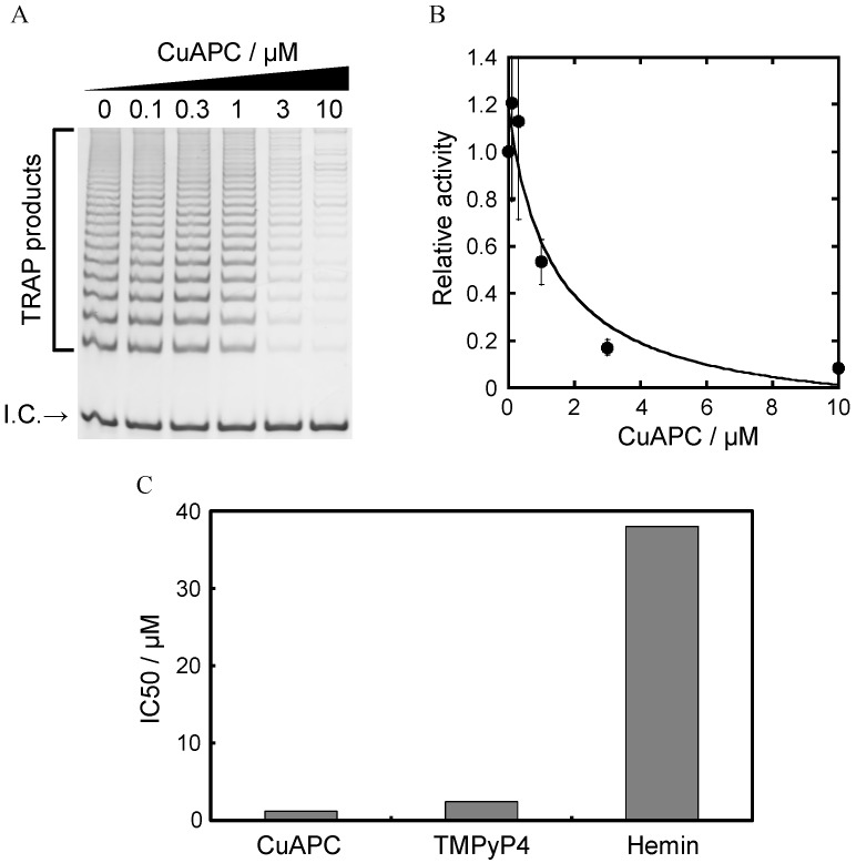 ( A ) Electrophoresis results from the two-step TRAP assay with 0–10 µM CuAPC. I.C. indicates the internal control for PCR amplification; ( B ) Relative activity of telomerase with 0–10 µM CuAPC. The relative activity value of 1 corresponds to the positive control ( i.e ., without CuAPC); ( C ) Comparison of the IC50 value of each ligand for telomerase inhibition.
