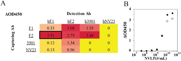 Detection of Norwalk VLPs using a sandwich ELISA. A) Antibody pair screening for the detection of Norwalk VLPs; values correspond to the absorbance for a sample for 10 9 VLPs offered; background absorbance for no VLP sample was subtracted (typical value ~0.1). Red color denotes maximum ΔOD450 observed in the ELISA, yellow lowest, and a smooth color gradient in between. Black box denotes the sandwich pair that was used in LFA. B) Sandwich ELISA detecting Norwalk VLPs where F2 was used as the capturing antibody. For the detection biotinylated F1 and streptavidin HRP (antibody sandwich, closed symbols), or the phage construct (Antibody-NeutrAvidin-AviTag phage) and anti-M13/ HRP conjugate (phage sandwich; open symbols) were used.