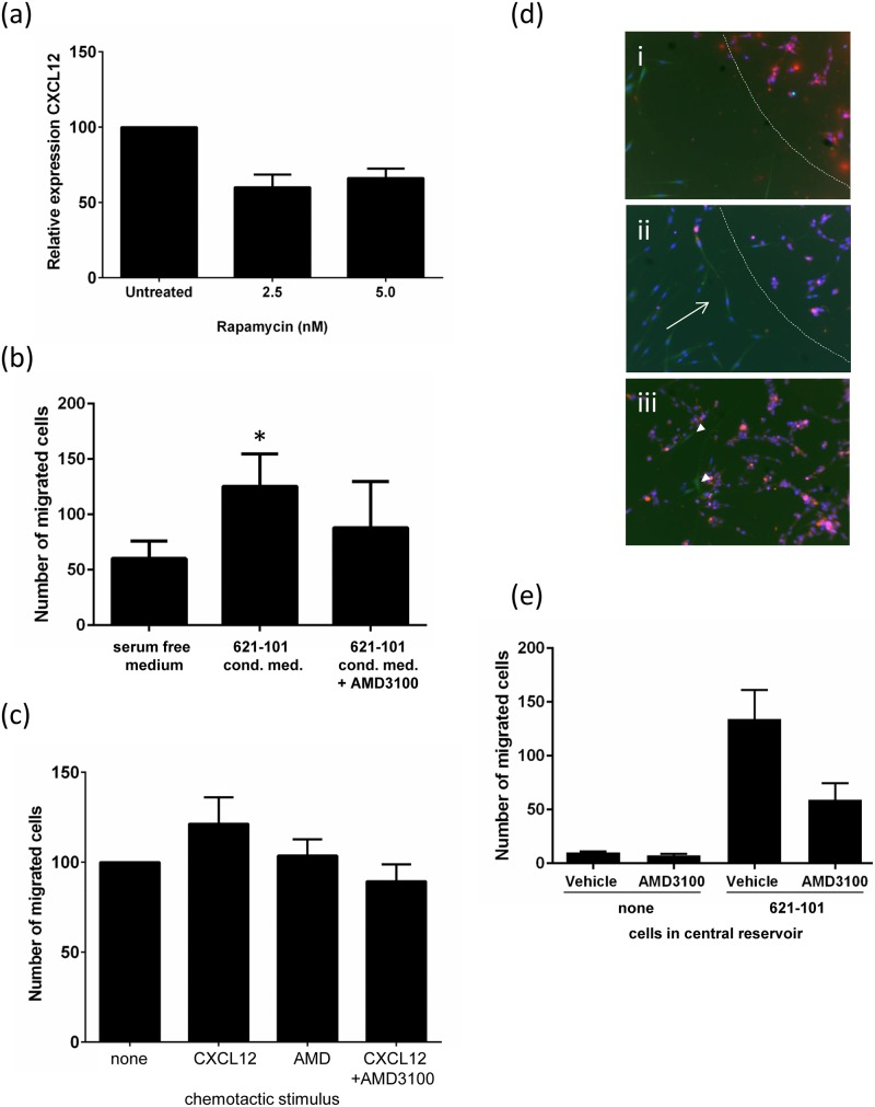 LAM cell medium is chemotactic for fibroblasts, and this is partially dependent on CXCR4. (a) 621–101 cells secrete CXCL12 protein; this is partially sensitive to rapamycin. (b) The presence of 621–101 cell conditioned medium (CM) increases fibroblast migration, which is partially blocked by AMD3100. (c) Fibroblasts migrate towards CXCL12 in a modified Boyden chamber (Transwell) assay; this is inhibited by the CXCR4 receptor antagonist AMD3100 at 100μg/ml (*p = 0.05). (d) Fibroblasts migrate towards 621–101 cells in a bidirectional migration assay. (i) Removal of the fence leaves a gap between the peripheral fibroblasts (green) and the central reservoir of (red) 621–101 cells (dotted), (ii) Fibroblasts migrate towards the central reservoir (arrowed), (iii) fibroblasts migrate into the central area (arrowed). (e) Addition of 200μg/ml AMD3100 reduces migration of fibroblasts in response to 621–101 cells by 56%. In the absence of 621–101 cells in the central reservoir migration is reduced by 93%.