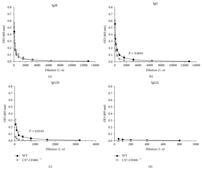 C. rodentium -specific sera antibodies of wild type (WT) ( n = 6) and C57-CD40L −/− ( n = 6) mice. Mice orally inoculated with 1 × 10 7 CFU of C. rodentium were bled at day 14 after inoculation. Each point of these curves represents the mean ± SD of the OD determinations. (a) The specific IgM titres were essentially identical between the two groups. ((b) and (c)) The specific IgG and IgG2b titres were significantly lower for C57-CD40L −/− mice than WT mice. (d) IgG2c specific antibodies of both WT and C57-CD40L −/− mice were just above baseline and IgG1 and IgG3 isotypes were undetectable. Antibody titres are presented as means and data was analysed by Mann-Whitney U -test. OD = optical density, (1 : n ) = dilution factor.