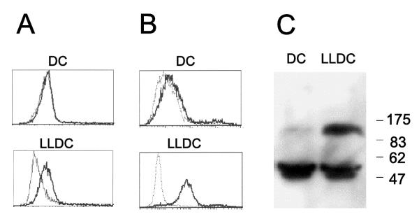 The EphA2 receptor tyrosine kinase is expressed by in vitro generated LLDC Adherent mononuclear cells were isolated and cultured one week in the presence of <t>GM-CSF</t> and IL-4 (for monocyte derived dendritic cells, DC) and <t>TGF-β</t> (for monocyte derived LLDC). (A) Cells were incubated with a monoclonal EphA2 antibody (bold line) or an irrelevant antibody (dotted line) followed by staining with PE-labeled α-mouse antibody. (B) Cells were incubated with a soluble EphA2 ligand fusion protein (ephrin-A4-Fc, bold line) and a negative control fusion protein (CD19-Fc, dotted line). (C) A Western blot with cell lysates from monocyte derived dendritic cells (DC) or LLDC (LLDC) were immunoblotted using a polyclonal anti-EphA2 antiserum.