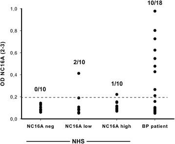 Anti-BP180-NC16A autoantibodies from healthy individuals bind to different epitopes within the NC16A domain. Samples from the indicated groups were tested for their IgG reactivity against NC16A2-3 (RSILPYGDSMDRIEKDRLQGMAPAAGADL). As reported previously [ 29 , 30 ], high reactivity with this epitope was observed in BP patients. By contrast, only a minority of samples from healthy individuals with IgG reactivity against NC16A showed reactivity with this epitope. Abbreviations: NHS: normal human sera