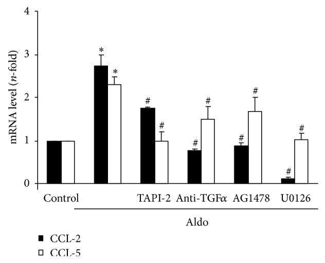 ADAM17/TGF- α /EGFR signaling blockade inhibits aldosterone-mediated proinflammatory factors upregulation. Cells were pretreated with the specific ADAM17 inhibitor TAPI-2 (50 μ mol/L; 1 hour), a neutralizing antibody against TGF α (2.5 μ g/mL, 24 hour), the EGFR kinase inhibitor AG 1478 (100 nmol/L, 1 hour), or the ERK inhibitor U0126 (10 μ mol/L; 1 hour) before stimulation with 1 μ mol/L Aldo for 6 hours. CCL-2 and CCL-5 gene expression levels were determined by real-time PCR. Data are expressed as mean ± SEM of 2-3 experiments. * P