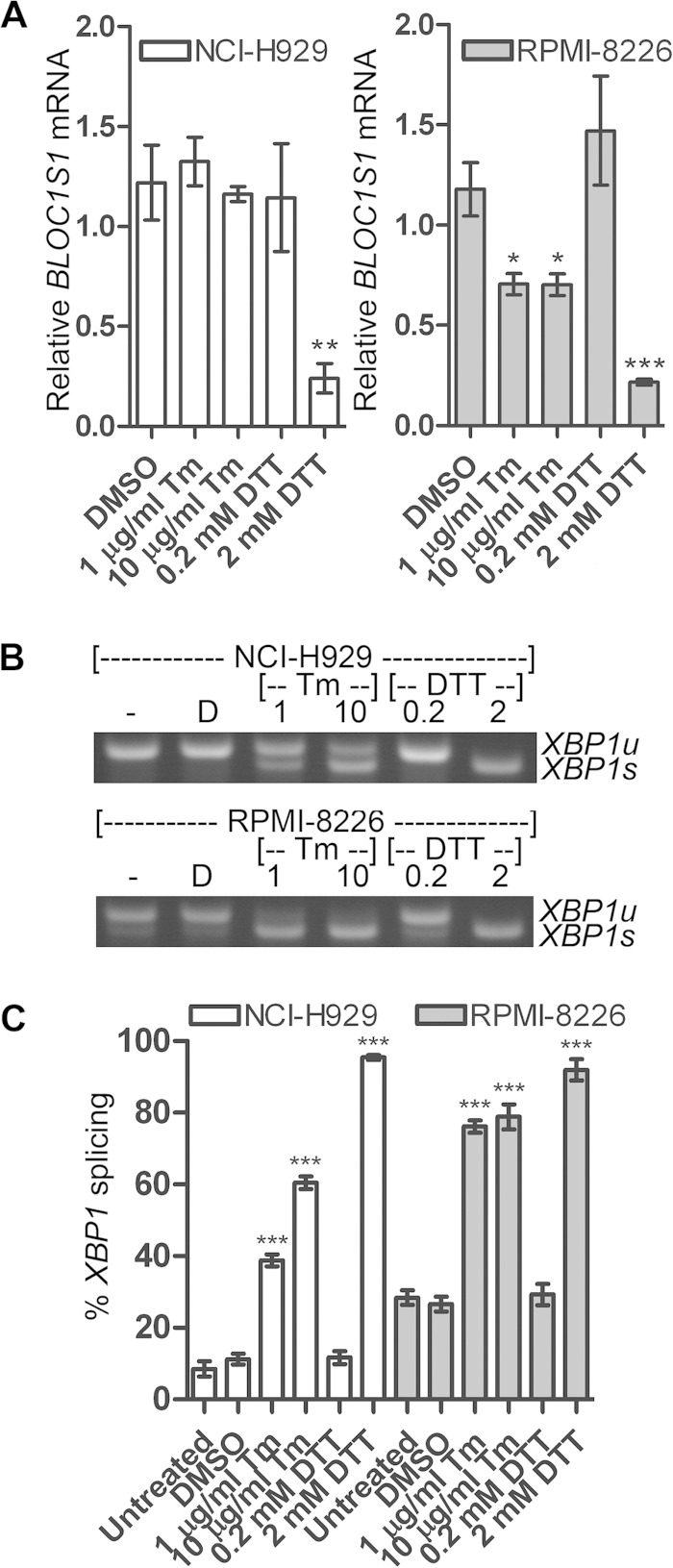 Degradation of BLOC1S1 is stressor dependent. (A) Relative quantities of BLOC1S1 in NCI-H929 and RPMI-8226 cells treated with the indicated stressors for 4 h. The mRNA level was measured by SYBR green qPCR and normalized to GAPDH and is shown relative to untreated cells. The data are means ± SEM of three independent experiments. (B) Representative agarose gel electrophoresis of the RT-PCR product surrounding the XBP1 splice site in the samples used for panel A. (C) Quantification of percent XBP1 splicing from the gel images shown in panel B. The data are means ± SEM of three independent experiments. *, P