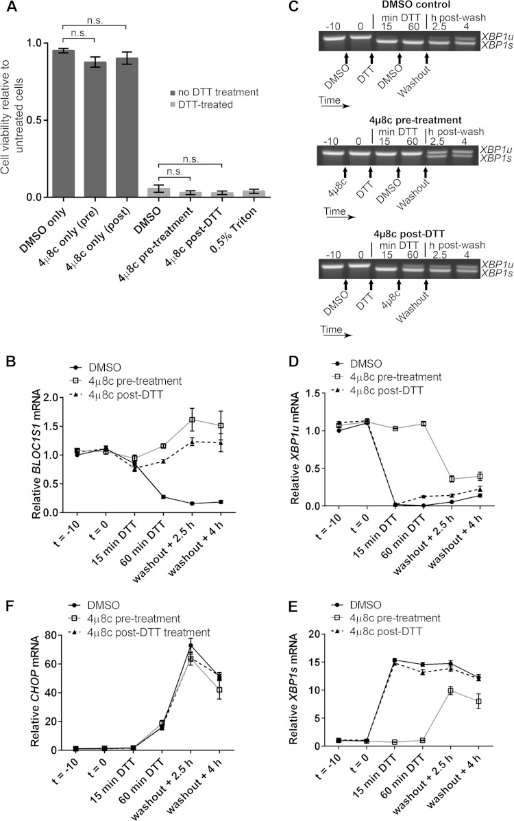 Inhibition of RIDD does not affect NCI-H929 cell viability under acute ER stress. (A) WST-1 cell viability assays of NCI-H929 cells treated as indicated with 2 mM DTT for 60 min (from time zero) and either pretreated (at time −10 min) or posttreated (at time 15 min) with 30 μM 4μ8c and then washed and allowed to recover for 24 h. Cells treated with 0.5% Triton X-100 were included as a dead-cell control. (B) SYBR green qPCR quantification of BLOC1S1 in the DTT-treated samples from panel A. (C) Representative agarose gel electrophoresis of the RT-PCR product surrounding the XBP1 splice site in the DTT-treated samples from panel A. The timing of treatments is indicated below the gel images. (D and E) TaqMan qPCR quantification of XBP1u (D) or XBP1s (E) in the DTT-treated samples from panel A. (F) SYBR green qPCR of relative CHOP expression in the DTT-treated samples from panel A. All qPCR data are normalized to GAPDH and are presented relative to the DMSO control at time −10 min of DTT. All the graphs show means ± SEM from three independent experiments. n.s., P > 0.05 (unpaired t test).