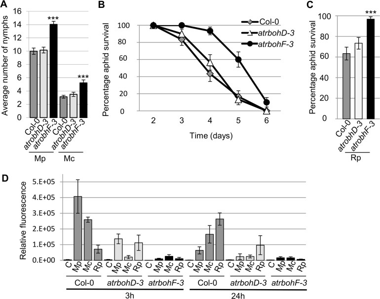 Arabidopsis atrbohD-3 and atrbohF-3 knock-out mutants show reduced non-host resistance and enhanced susceptibility to aphids. (A) Myzus persicae (Mp) and M . cerasi (Mc) performance on Arabidopsis atrbohD-3 and atrbohF-3 knock-out lines. Four-week old plants were exposed to two adult aphids and nymph production was counted after 10 days. Average nymph production for M . persicae and M . cerasi was calculated from three independent replicated experiments, with 10 plants per replicate per treatment. (B) Graph shows R . padi aphid survival on control (Col-0) and Arabidopsis atrbohD-3 and atrbohF-3 knock-out lines over 6 days. Three independent biological replicates were carried out, with 10 plants per replicate. Error bars indicate standard error. (C) Rhopalosiphum padi (Rp) survival on Arabidopsis atrbohD-3 and atrbohF-3 mutants and Col-0 wild-type plants between 3 and 4 days of the experiment. The two-tailed Student's t -test was used for statistical analyses (*** indicates p-value