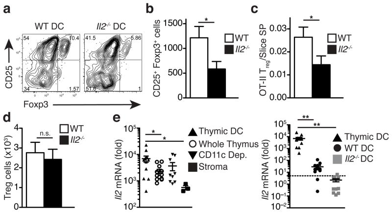 """Antigen-bearing dendritic cells provide a local source of IL-2 to developing thymic T reg cells. (a-d) Impact of IL2 mutation on ability of DCs to support T reg cell development. Bone marrow derived DCs from WT or Il2 −/− mice were incubated with 1 mg/ml OVA protein and added to WT thymic slices along with OT-II thymocytes. OT-II T reg cell development was assessed after 3 days of culture. (a) Representative flow cytometry analysis of gated OT-II CD4SP. (b) Number of OT-II T reg cells (CD25+Foxp3+) recovered per thymic slice. (c) Ratio of OT-II T reg cells to slice CD4 single positive thymocytes. (d) Quantification of endogenous slice T reg cells recovered per slice. (a-d) n=20 and 21 slices respectively, data pooled from 3 independent experiments. (e) qRT-PCR analysis of IL-2 expression. RNA was prepared from the indicated samples and analyzed by qRT-PCR using TaqMan probes. Data are normalized to GAPDH and presented as fold increase over the background values from Il2 −/− bone marrow derived DCs. Thymi from wild type mice were dissociated with collagenase-digestion and separated into single cell suspension """"whole thymus"""" and an adherent fraction """"stroma:. For some samples, single cell suspensions were depleted of CD11c+ cells using magnetic beads: """"CD11c depleted"""". CD11c enriched fractions were further purified by FACS to yield > 85% CD11c+ cells: """"thymic DC"""". Bone marrow derived DCs from wild type or Il2 −/− mice were included for comparison. For Il2 −/− DCs, no IL2 signal was observed after 40 cycles of PCR, therefore values reported are upper estimates (indicated by grey shading), and the dashed line indicates the lower limit of detection of the assay. Data from thymic DC samples are included on both plots for comparison. n=12 experimental replicates from 4 biological samples except """"CD11c depleted"""" n=9 experimental replicates, 3 biological samples or """"stroma"""" n=3 experimental replicates, 1 biological sample. Error bars represent +/− SEM. *p"""