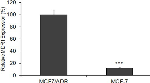 Relative mRNA levels for MDR1 in MCF-7/ADR human multidrug-resistant breast cancer cells and their parental cells MCF-7. The MDR1 mRNA expression value was normalized to β-actin . Data are means±SEM. (n = 3; *** P