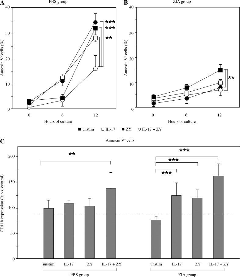 Effect of IL-17 and TLR2 stimulation on the dynamic of Ly6G + cell apoptosis. Apoptosis of purified blood Ly6G + CD11b + cells from A) PBS group and B) ZIA group during culture period of 12 hours, 37°C, 5% CO 2 measured by commercial Annexin V kit. Neutrophils were stimulated with zymosan (20 µg/ml) in the presence or the absence of IL-17 (40 ng/ml). Apoptosis was evaluated at each time point in 6 samples per group and the values represent the mean ± SEM of Annexin V + neutrophils. ** p