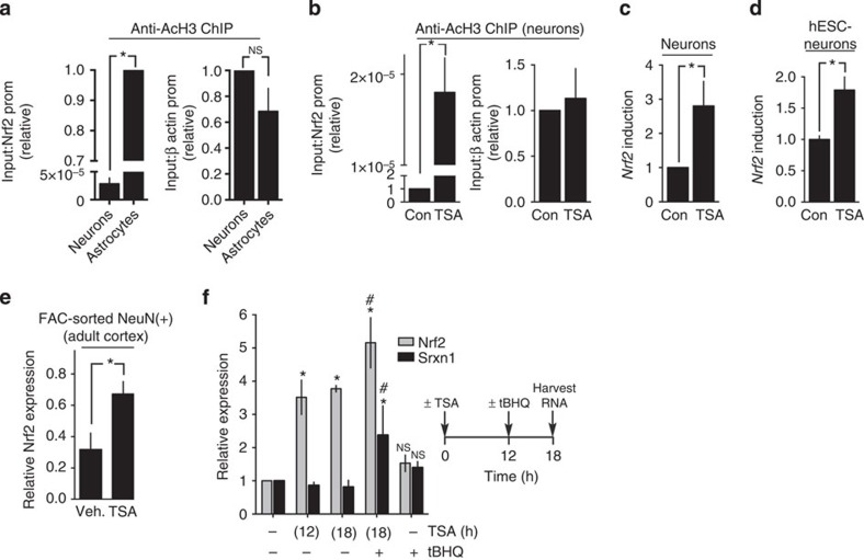 The Nrf2 promoter is epigenetically repressed in cortical neurons. ( a ) ChIP analysis of acetylated <t>histone</t> H3 (Ac-H3) occupancy at the Nrf2 (left) and β-actin (right) promoters in neurons and astrocytes, normalized to input and expressed relative to each other. * P