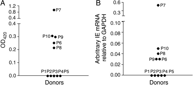 Alveolar macrophages from seropositive individuals express immediate early gene (IE) messenger RNA (mRNA). A , Serum specimens from 10 donor patients (P) were tested for the presence of IE immunoglobulin G <t>(IgG)</t> by enzyme-linked <t>immunosorbent</t> assay <t>(ELISA).</t> B , Alveolar macrophages were isolated directly ex vivo from the same patients and harvested for reverse-transcription quantitative polymerase chain reaction (PCR) analysis for the presence of human <t>cytomegalovirus</t> (HCMV) IE mRNA. A blood specimen from each patient was also assessed by PCR for the presence of HCMV DNA, to determine whether viremia was present, and for the presence of IgM. These data and the data from panels A and B are summarized in Table 1 .