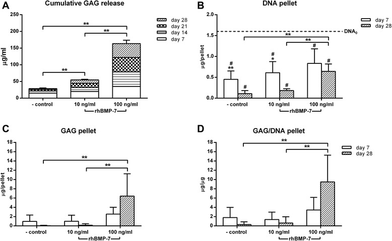 Glycosaminoglycan (GAG) release and GAG, DNA, and GAG/DNA content in cultured nucleus pulposus cells (NPCs) treated with 10 or 100 ng/ml rhBMP-7. A . NPC pellets treated with rhBMP-7 show a significant dose-dependent increase in cumulative GAG release into the medium compared with the negative control. B . Regardless of the culture condition, DNA content of the NPC pellets was significantly lower compared with DNA content at day 0 (DNA 0 ; dashed line), indicated by #. NPC pellets treated with 100 ng/ml rhBMP-7 showed a significantly higher DNA content at day 28 compared with the negative control and the 10 ng/ml rhBMP-7-treated NPC pellets. C , D . A significant increase in GAG content and GAG/DNA at day 28 was shown in the 100 ng/ml rhBMP-7-treated NPC pellets compared with the negative control and the 10 ng/ml rhBMP-7-treated NPC pellets. Data are expressed as mean ± SD. **Indicates significant difference at a 99% confidence interval (CI); *indicates significant difference at a 98% CI; # indicates a significant difference at a 99% CI.