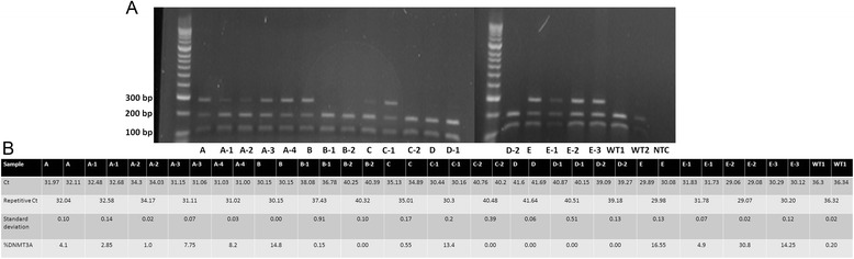 Concordance of ASB-PCR. a Representative endonuclease restriction analysis of follow-up samples of five patients (A-E). Wild type samples show two bands at 190 bp and 114 bp. Positive samples display three bands at 289 bp, 190 bp, 114 bp due to the loss of a restriction site of Fnu4HI caused by the mutation. Hyperladder II (Bioline) was used as marker. b Results of ASB-PCR analysis