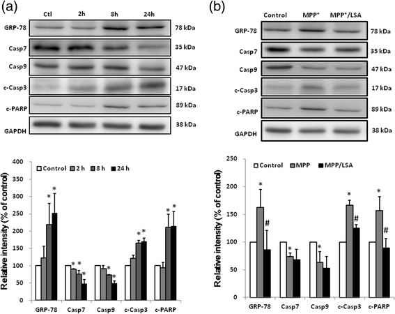 The MPP + -induced pro-apoptotic responses in CATH.a cells were attenuated by LSA. CATH.a cells were cultured with 300 μM MPP + for various time-periods ( a ) or pretreated with 100 μM LSA for 30 min, and then were cultured with 300 μM MPP + for 8 h ( b ). After treatments, the indicated proteins were detected by western blotting and the representative images are shown. Lower part of panel ( a ) and ( b ) are the relative protein level of GRP-78, caspase 7 (Casp7), caspase 9 (Casp9), cleaved caspase 3 (c-Casp3) and cleaved PARP (c-PARP). The protein level has been normalized with GAPDH. Results are means ± S.D. from three independent experiments. Significant differences between the cells treated with vehicle and MPP + were indicated by *, P