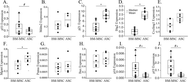 Adipose-derived mesenchymal stem cells have higher levels of DNA damage-related p53 targets, similar levels of Bcl-2 family p53 targets, and a lower p16 and p19 expression than bone marrow mesenchymal stem cells. Independent nine to 10 preparations (A, C, D, I, J) or six preparations (B, E, F, G, H) of paired adipose-derived mesenchymal stem cells (ASCs) and bone marrow mesenchymal stem cells (BM-MSCs; prepared from the same male or female mouse) were analyzed for RNA levels of the indicated gene by quantitative real-time PCR. * P