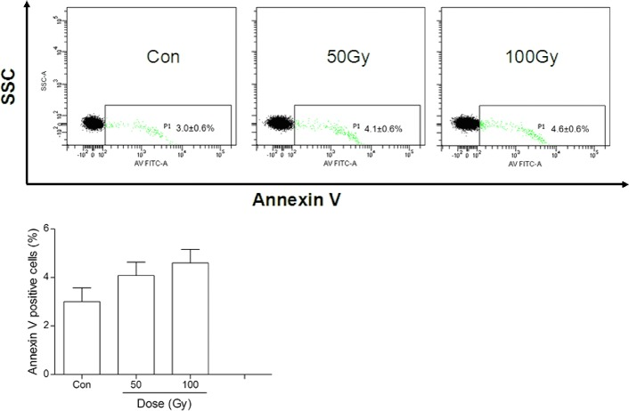 Effects of 137 Cs gamma-ray irradiation on phosphatidylserine exposure in erythrocytic membranes. After 137 Cs gamma-ray irradiation (0, 50 and 100 Gy), phosphatidylserine exposure in erythrocytic membranes was detected by annexin V staining. Data are means ± SEM; n = 14 erythrocyte samples from 14 volunteers in each group.