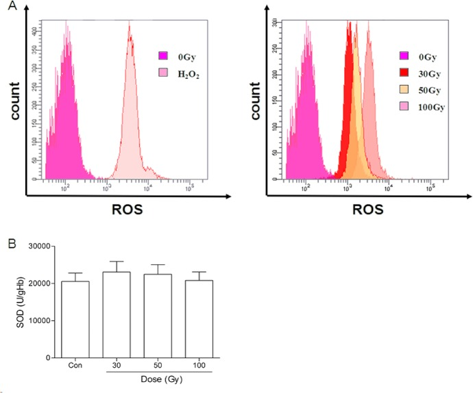 Effects of 137 Cs gamma-ray irradiation on ROS levels and SOD in erythrocytes. After 137 Cs gamma-ray irradiation (0, 30, 50 and 100 Gy), the ROS level (A) and SOD (B) in erythrocytes were determined by the fluorescence probe CM-H 2 -DCFDA and a commercial kit, respectively. Con: the dose of irradiation was 0 Gy; H 2 O 2 : positive control group. n = 14 (B) SOD of RBCs change after irradiation. Data are means ± SEM, n = 14.