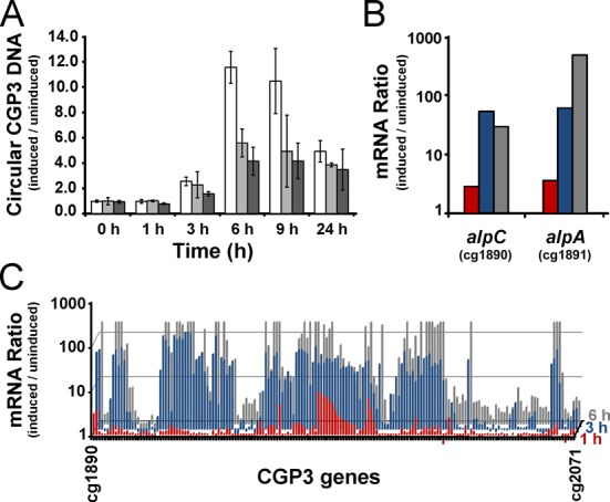 Impact of AlpC on CGP3 replication. ( A ) The relative amount of circular phage CGP3 <t>DNA</t> was quantified by qPCR in C. glutamicum wild type (white) and Δ alpC (light gray), and Δ alpA (dark gray) upon treatment with 0.6 μM mitomycin C. Shown are average values with standard deviation of three independent biological replicates. ( B ) Time course of alpC and alpA expression upon prophage induction triggered by the addition of 0.6 μM mitomycin C. Shown is the mRNA ratio of cells treated with mitomycin C versus untreated cells 1 (red), 3 (blue) and 6 h (gray) after mitomycin C addition analyzed by DNA <t>microarrays.</t> ( C ) Time course of the mRNA ratio of the whole CGP3 gene region after addition of mitomycin C (as described in B).