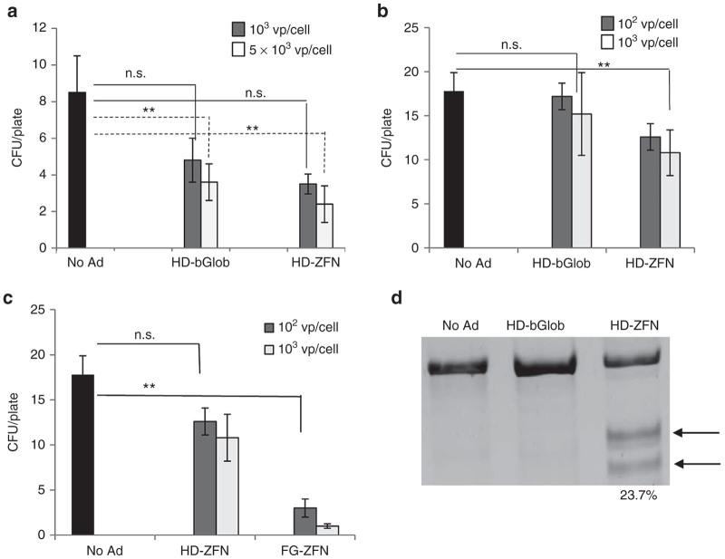 Analysis of LTC-IC. CD34+ cells were transduced with HD-bGlob and HD-ZFN at the indicated MOIs. Three days later, cells were transferred to LTC-IC medium and cultured for 5 weeks. A total of 3,000 LTC-IC cells were then plated in methylcellulose supplemented with growth factors and cytokines. Two weeks later, colonies were counted. Cells from all colonies per plate were combined, genomic DNA was isolated, and subjected to T7E1 nuclease assay. ( a,b ) Numbers of colonies per plate for donor A and B, respectively. There was no difference in the ratio of BFU-E and CFU-GM colonies in the different groups. N = 3 plates. n.s., nonsignificant ( P > 0.05), ** P