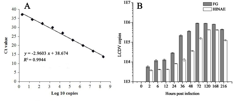 Dynamics of LCDV copies in FG and HINAE cells post LCDV infection investigated by qPCR. (A) Standard curve of LCDV MCP qPCR assays. The X-axis showed the positive control plasmid copy number in Log 10 value, and the Y-axis indicated the corresponding cycle threshold (Ct) value. R 2 : coefficient of determination. (B) Changes of LCDV copies in FG and HINAE cells post LCDV infection. 0 h represented un-infected cells. Error bars represented SD. Data represented the number of LCDV copies per microgram of total DNA in the cell samples (mean ± SD; n = 3).