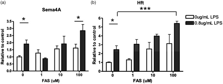 Microglial expression of Sema4A protein was increased after FAS induced iron loading while activated by LPS. Primary rat microglia cells were treated with increasing FAS or with 0.8 µg/mL LPS and increasing concentrations of FAS for 24 hr. (a) Sema4A is significantly increased after LPS alone. With the addition of LPS/FAS, there is a significant increase in Sema4A expression. (b) Hft expression is significantly increased after LPS alone. With the addition of LPS/FAS, expression is significantly increased. Protein quantification is relative to beta-actin loading control. Two-way analysis of variance with Bonferroni post hoc test was used to determine significance. Values represent average ± SEM . FAS = ferrous ammonium sulfate; Hft = H-ferritin. * p