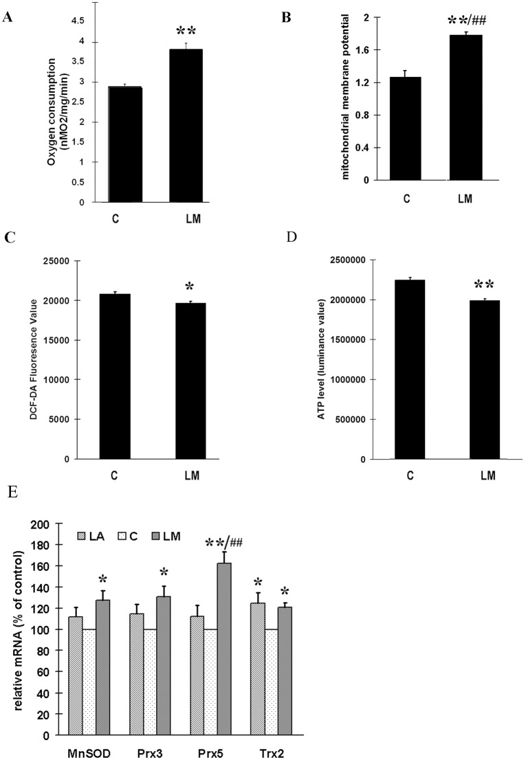The effects of LM on oxygen consumption (A), mitochondrial membrane potential (MMP) (B), ROS production (C); cellular ATP level (D) and the expression of MnSOD,Trx2,Prx3,and Prx5 (E). ARPE-19 cells were treated with 40 μmol/L LM for 48 hours; then the following assays were carried out immediately. (A) LM promoted oxygen consumption. Results are expressed as the rate of oxygen consumption, with media without cells used as a blank. Values are means ± SEM from three independent experiments; three parallel measurements were used for each sample in every experiment. (B) LM treatment increased MMP as determined by JC-1 staining. Values are means ± SEM of the ratio of fluorescence at 590 nm to 530 nm from three independent experiments; 4 parallel wells for each group were used in each experiment. (C) LM treatment decreased ROS production examined by DCF-DA staining. Values are means ± SEM of 8 parallel wells of a representative experiment, from four independent experiments each showing similar trends. (D) LM treatment decreased cellular ATP level. Values are means ± SEM from 3 independent experiments. (E) Expression of MnSOD,Trx2,Prx3,and Prx5. ARPE-19 cells were treated with 40 μmol/L LM or LA for 48 h; then RNA was isolated and reverse-transcribed to cDNA. Real time PCR was employed to measure expression levels of the indicated genes. The results (from 5 independent experiments) are expression ratios of the target genes to 18SrRNA, and are normalized to control (control = 100). C stands for control, LM stands for 40 μmol/L LM treatment and LA stands for 40 μmol/L LA treatment. Statistical significance was established by one way ANOVA followed by the Tukey test (A, B, C, D) or LSD test (E). * p