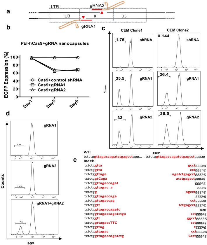 Nanocapsule delivery of gRNAs to excise the HIV-1 provirus by CRISPR mutagenesis. a) Schematic illustrating the position of two adjacent gRNAs directed to the HIV-1 LTR. b) A time course for knockout of EGFP expression was determined by flow cytometry. U6-control shRNA (CCR5-shRNA (a short linear <t>DNA</t> cassette with sh1005 shRNA expressed by U6 promoter)) was used a negative control. Dead cells were excluded by Live/Dead cell viability assay. c) Disruption of EGFP expression in two <t>CEM-T4</t> clones, each bearing a single integrated EGFP lentiviral vector (FG11 EGFP). The U6-gRNA DNA cassette was encapsulated by nanocapsules, the hCas9 plasmid was condensed by PEI. The integration site of the lentiviral vector in Clone 1 is at chromosome (chr) 7 (-16350165). The integration site in Clone 2 is at chromosome (chr) 3 (+37026604). U6-control shRNA was used as a negative control. Dead cells were excluded by Live/Dead cell viability assay. Transduction efficiency is estimated to be 69.7% by transducing a Rhodamine B-labeled DNA cassette. d) EGFP expression after CRISPR/Cas9 nickase treatment. CEM-T4 cells were co-transduced with PEI condensed hCas9 nickase and gRNA nanocapsules. Dead cells were excluded by Live/Dead cell viability assay. e) Sequence analysis of the target site in the TAR region of LTR after the gRNA1/Cas9 treatment. DNA sequence demonstrated a single remaining LTR footprint resulting from proviral excision. The target sequence is indicated in red. The host cell genome sequence with integrated HIV vector is indicated as wild type (WT) on the top.