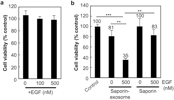 Saporin-encapsulated exosomes enhances cytotoxicity by EGF stimulation and macropinocytosis induction. ( a ) Cell viability of A431 cells treated with CD63-GFP-exosomes (20 μg/ml) in serum-free cell culture medium with or without co-treatment of EGF (100 or 500 nM) for 24 h at 37 °C, analysed using a WST-1 assay. ( b ) Cytotoxicity of saporin-encapsulated exosomes (4 μg/ml) or saporin (7 μg/ml) with or without co-treatment of EGF (500 nM). A431 cells were treated with each test sample in 10% FBS containing cell culture medium for 48 h at 37 °C, prior to a WST-1 assay. The data are the averages (±SD) of three experiments. ** p
