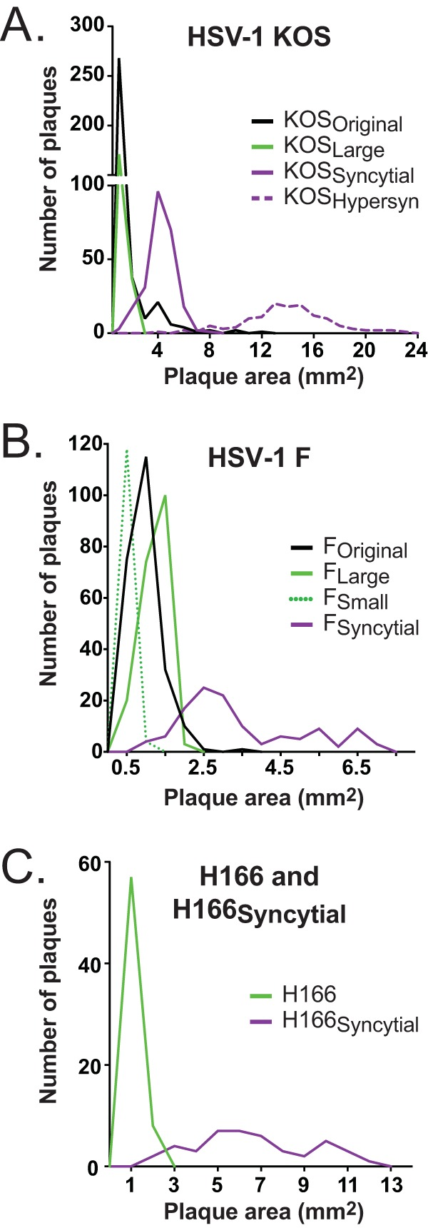 Distribution of plaque morphologies before and after plaque purification. The graph depicts the number of plaques with a given area for each variant of plaque morphology shown in Fig. 1 . (A) Distribution of the original HSV-1 KOS stock and the large, syncytial, and hypersyncytial variants. Bins include the number of plaques with areas up to the value shown on the x axis (bins of 1 mm for HSV-1 KOS subclones). (B) Distribution of the original HSV-1 F stock and the large, small, and syncytial variants. Bins of 0.5 mm were used for HSV-1 F subclones. (C) Size distribution of plaques from clinical HSV-1 strains H166 and H166 Syncytial , using bins of 1 mm. Solid black lines indicate parental virus stocks, green lines indicate variants with standard cytopathic effect (CPE), and purple lines indicate syncytial variants. All plaques were quantified at 72 hpi. Note that the x axis scale varies across panels.
